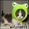 Kitten in a frog hat